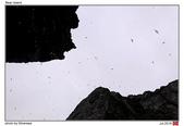 Bear Island, Norway_Jul'18:BI15.jpg