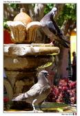San Miguel de Allende, Mexico_Mar'19:SM09.jpg
