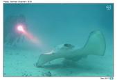 Diving in Palau_Dec'17:PalauG7.jpg