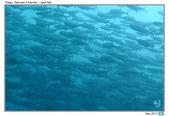 Diving in Palau_Dec'17:PalauG2.jpg