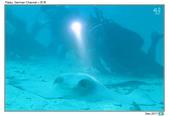 Diving in Palau_Dec'17:PalauG4.jpg