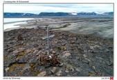 Crozierpynten & Eolusneset, Svalbard_Jul'18:SVBab.jpg