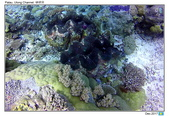Diving in paradise, Palau_Dec'17:Palau65.jpg