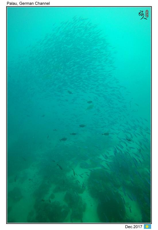 Diving in Palau_Dec'17:PalauF7.jpg