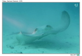 Diving in Palau_Dec'17:PalauG6.jpg