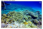 Diving in paradise, Palau_Dec'17:Palau53a.jpg