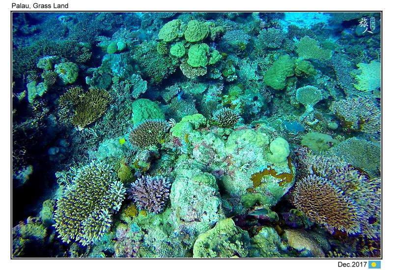Diving in paradise, Palau_Dec'17:Palau15.jpg
