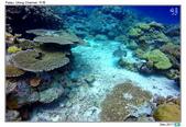 Diving in paradise, Palau_Dec'17:Palau53e.jpg