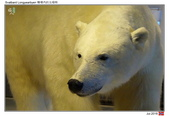 Svalbard, far north_Jul'18:LYB12.jpg