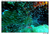 Diving in paradise, Palau_Dec'17:Palau24.jpg