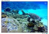 Diving in paradise, Palau_Dec'17:Palau53l.jpg