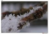 日本中部お雪見~白川鄉_Feb'10:shirakawa12.jpg