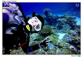 Diving in paradise, Palau_Dec'17:Palau60.jpg