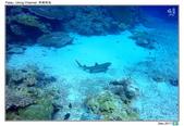 Diving in paradise, Palau_Dec'17:Palau53j.jpg