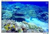 Diving in paradise, Palau_Dec'17:Palau53c.jpg