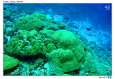 Diving in paradise, Palau_Dec'17:Palau50.jpg