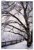 日本中部お雪見~白川鄉_Feb'10:shirakawa13.jpg
