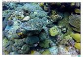 Diving in paradise, Palau_Dec'17:Palau53f.jpg