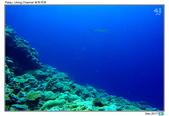 Diving in paradise, Palau_Dec'17:Palau52.jpg