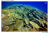 Diving in paradise, Palau_Dec'17:Palau62a.jpg