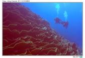 Diving in paradise, Palau_Dec'17:Palau63a.jpg