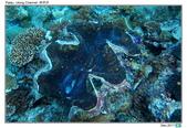 Diving in paradise, Palau_Dec'17:Palau67a.jpg