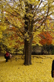 Day 2, 奈良鹿公園‧世界遺產東大寺:DSC05354.JPG