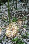 2013 梅雨季前,土城‧最後一場桐花雪~~:IMG_9675.JPG