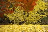 Day 2, 奈良鹿公園‧世界遺產東大寺:DSC05399.JPG