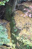 Day 2, 奈良鹿公園‧世界遺產東大寺:DSC05430.JPG