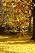 Day 2, 奈良鹿公園‧世界遺產東大寺:DSC05365.JPG