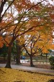 Day 2, 奈良鹿公園‧世界遺產東大寺:DSC05413.JPG