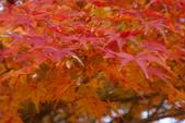 Day 2, 奈良鹿公園‧世界遺產東大寺:DSC05388.JPG