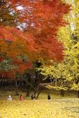 Day 2, 奈良鹿公園‧世界遺產東大寺:DSC05393.JPG