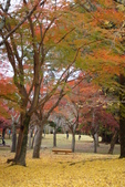 Day 2, 奈良鹿公園‧世界遺產東大寺:DSC05425.JPG
