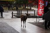 Day 2, 奈良鹿公園‧世界遺產東大寺:DSC05254.JPG