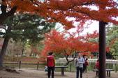 Day 2, 奈良鹿公園‧世界遺產東大寺:DSC05343.JPG