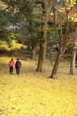Day 2, 奈良鹿公園‧世界遺產東大寺:DSC05355.JPG