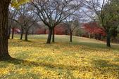 Day 2, 奈良鹿公園‧世界遺產東大寺:DSC05371.JPG