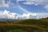 天秤颱風過後‧六十石山金針花,依然綻放~~:IMG_7312.JPG