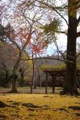 Day 2, 奈良鹿公園‧世界遺產東大寺:DSC05414.JPG