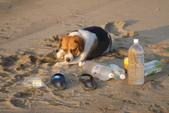 沙崙海灘-喜見五彩霞光:DSC05675.JPG
