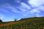 天秤颱風過後‧六十石山金針花,依然綻放~~:IMG_7126.JPG