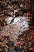 Day 2, 奈良鹿公園‧世界遺產東大寺:DSC05279.JPG