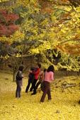 Day 2, 奈良鹿公園‧世界遺產東大寺:DSC05356.JPG