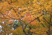 Day 2, 奈良鹿公園‧世界遺產東大寺:DSC05344.JPG