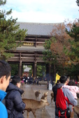 Day 2, 奈良鹿公園‧世界遺產東大寺:DSC05258.JPG