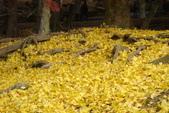 Day 2, 奈良鹿公園‧世界遺產東大寺:DSC05400.JPG