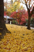 Day 2, 奈良鹿公園‧世界遺產東大寺:DSC05415.JPG