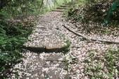 2013 土城桐花,白雪紛飛...落花鋪滿菜園裡~~:IMG_8926.JPG
